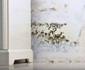 Schimmel Verwijderen Muur : Kostprijs muur schimmel verwijderen u vochtbestrijding advies be